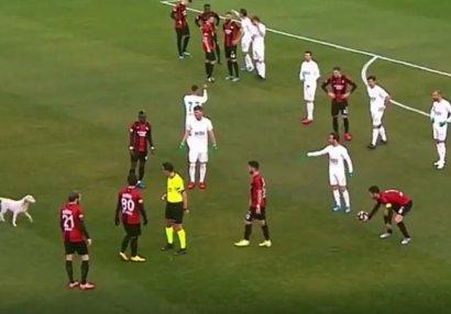 Türkiyədə it 3 dəfə meydana girdi, oyunu dayandırdı - VİDEO