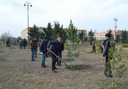 AFFA 50 mindən çox ağac əkdi